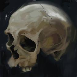 Skull Study by carts