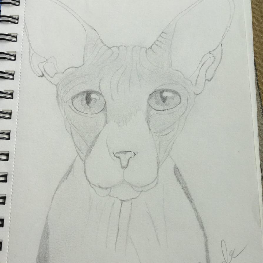 Sphynx Quick Sketch by Gothic-Night-Raven