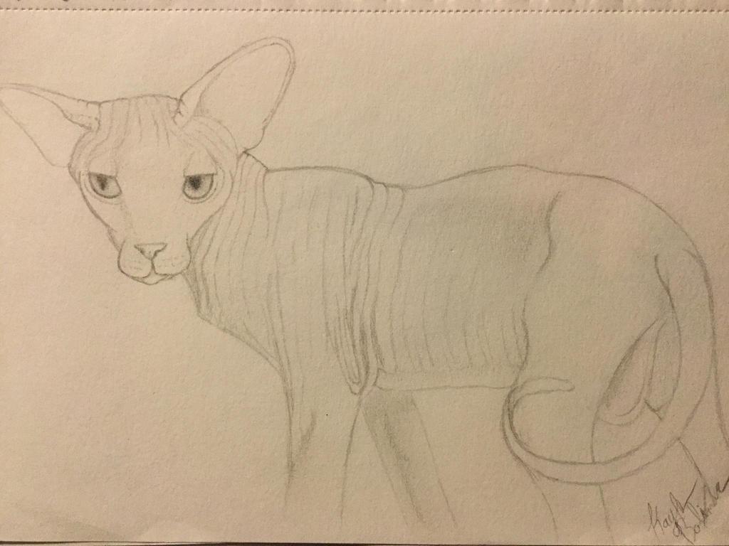 Sphynx Cat Sketch II  by Gothic-Night-Raven