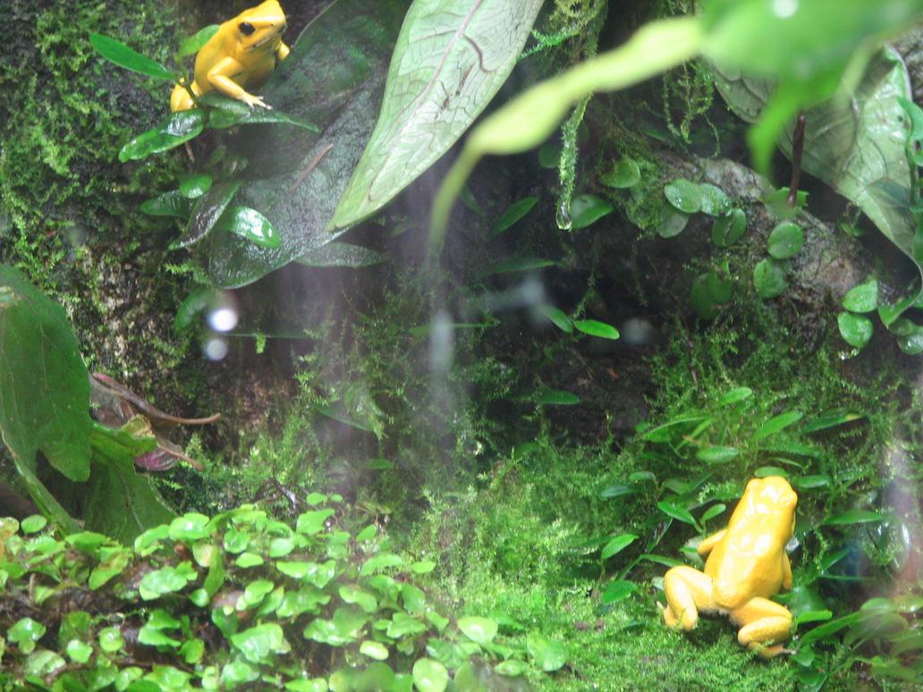 Frog Aquarium Related Keywords & Suggestions - Frog Aquarium Long Tail ...