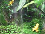 Shedd Aquarium Yellow Frogs