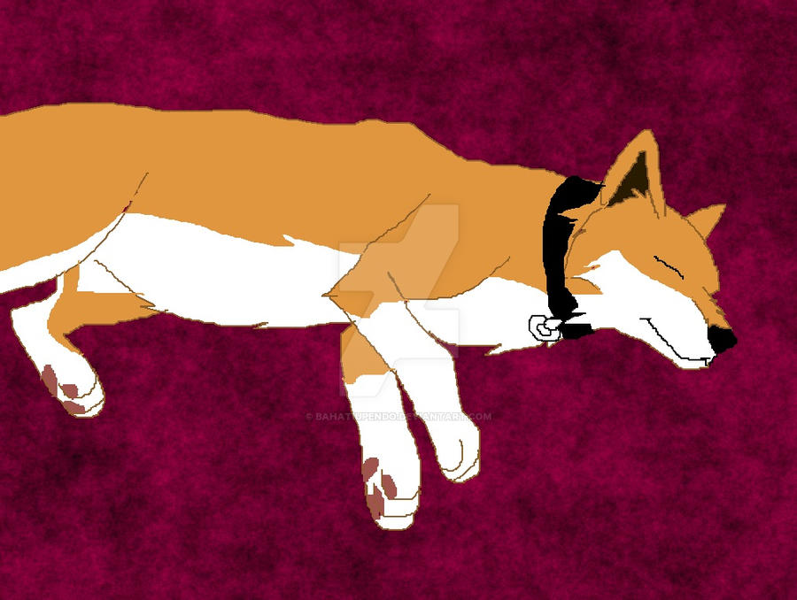 domestic dingo sleeping by BahatiUpendo