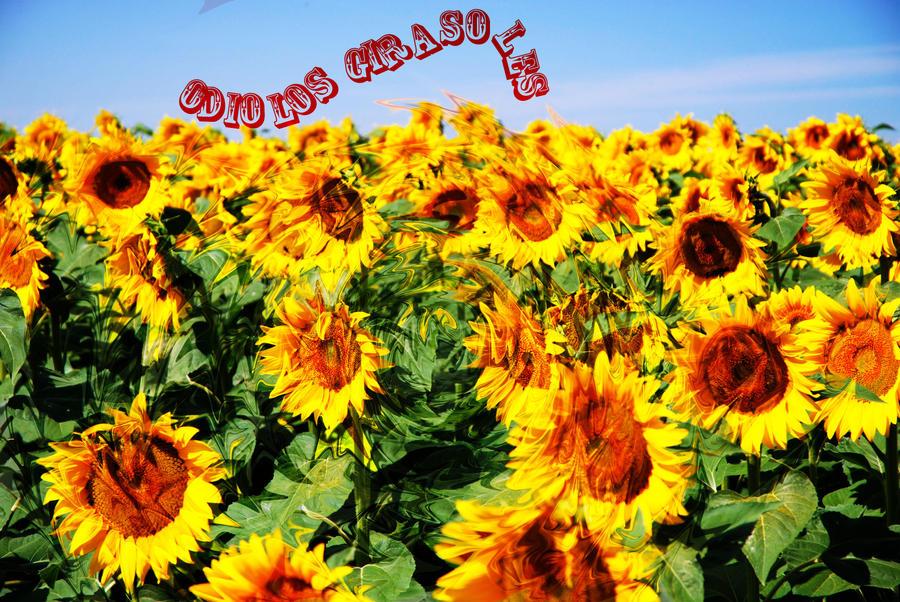 I hate sunflowers by BahatiUpendo