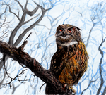 Owl by hida-7