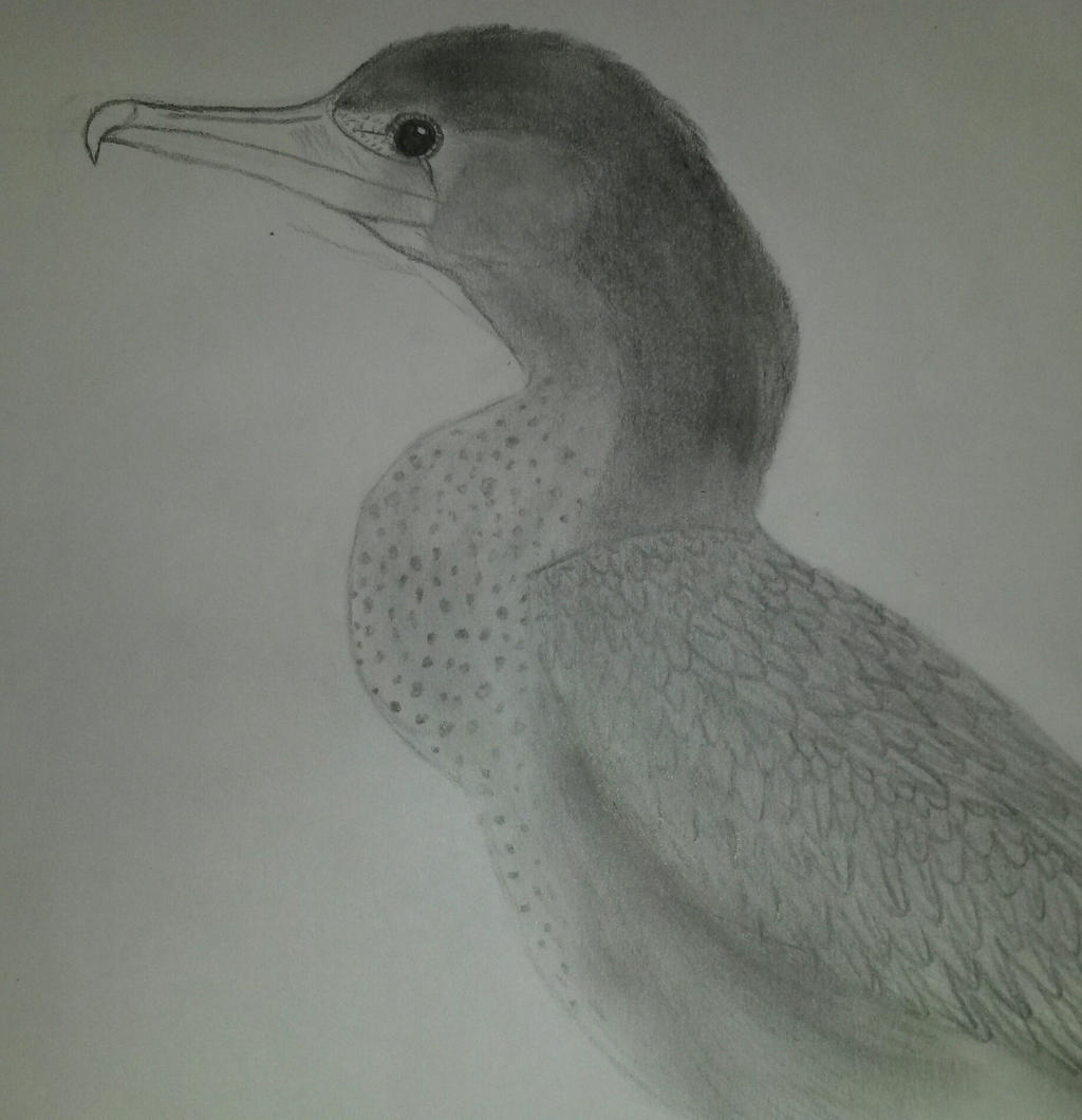 bird by Sharon1997