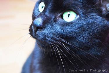 Cat eyes. by ShaneNoelle