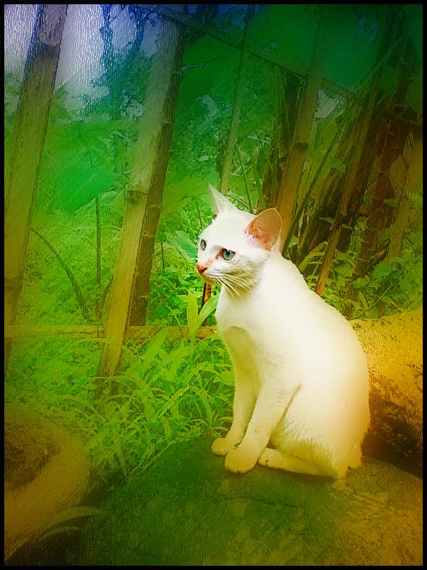echan93's Profile Picture