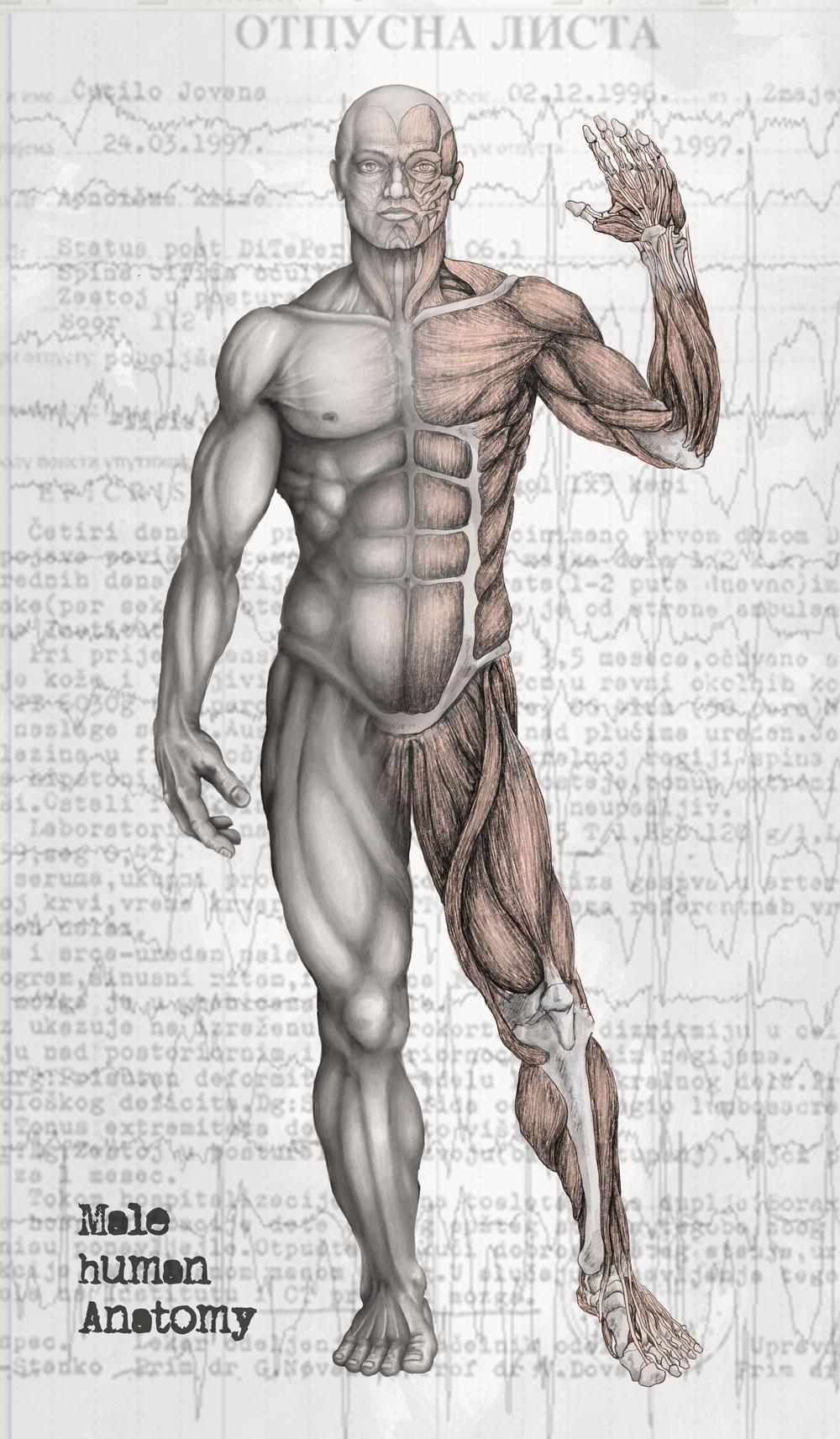 Male Human Anatomy by kiedan