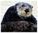 Grandpa Otter by shell4art