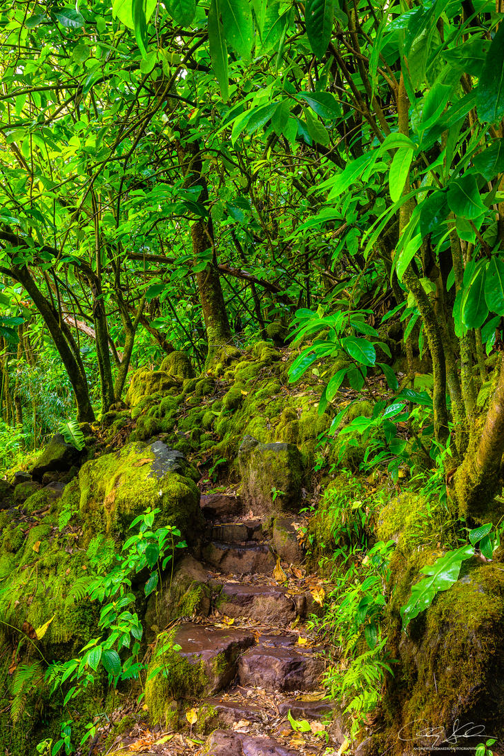 Step into Eden by AndrewShoemaker