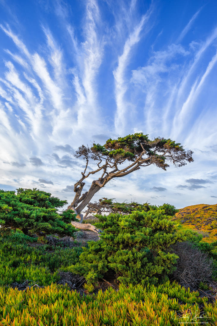 Windswept by AndrewShoemaker