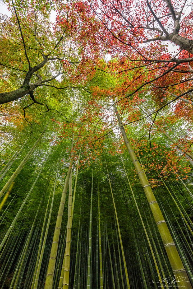 Autumn Bamboo by AndrewShoemaker