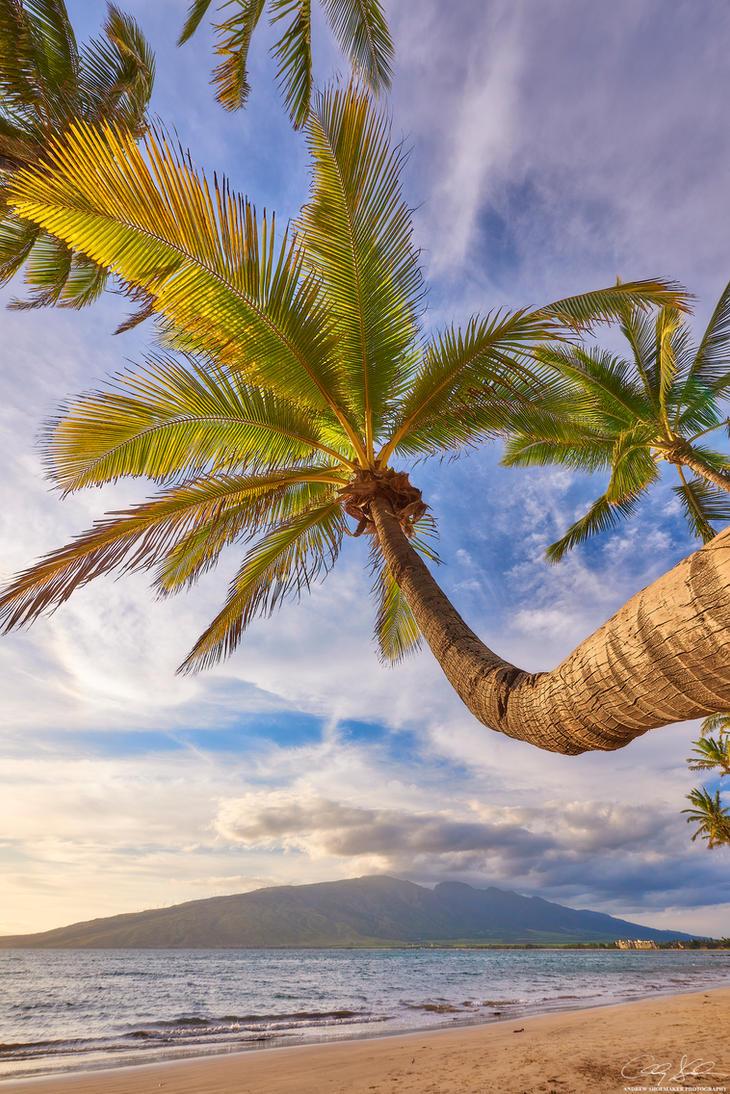 Coconut Daze by AndrewShoemaker