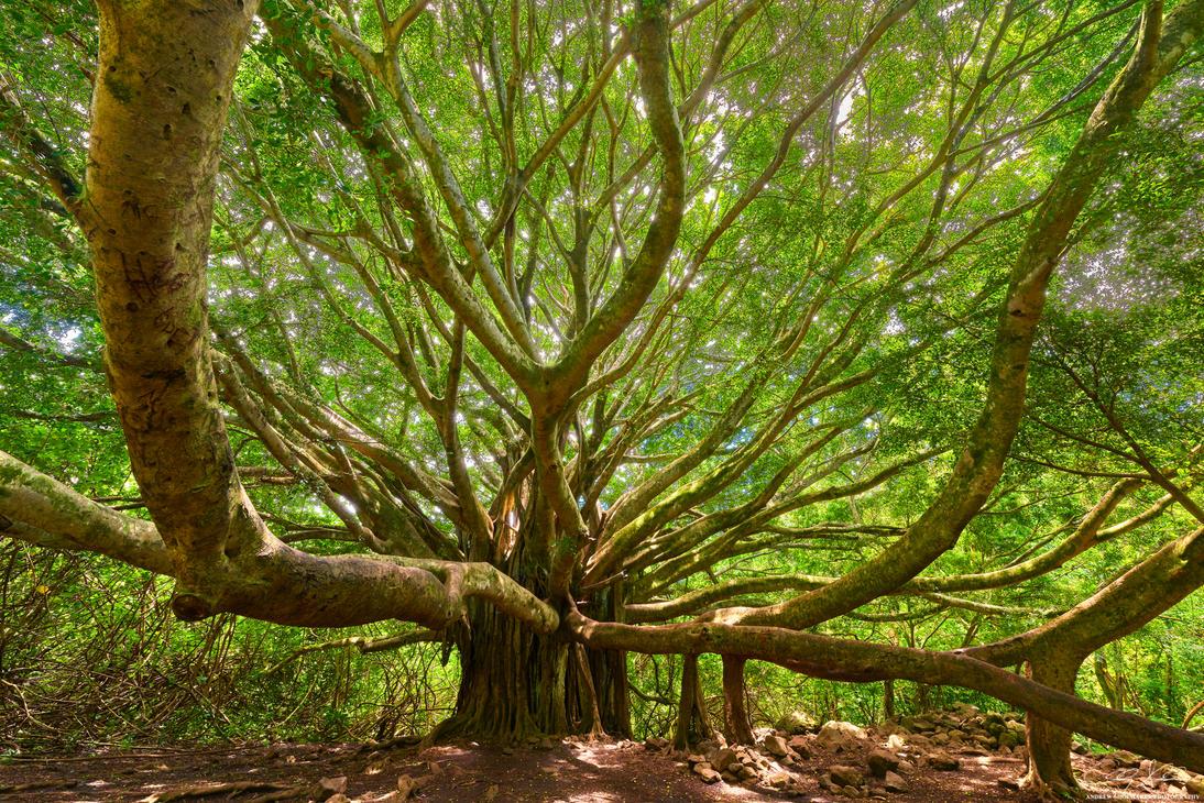Ohana Tree by AndrewShoemaker
