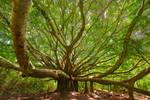 Ohana Tree