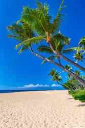 Ka'anapali Palms by AndrewShoemaker