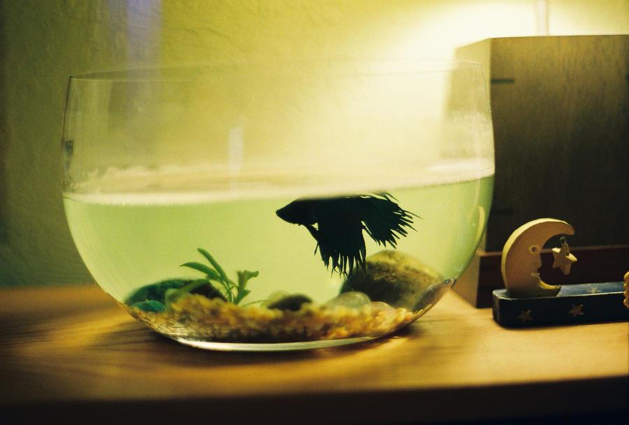 Fishy fish fish