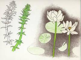 Water Plants Study
