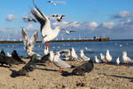 seagulls (original color version)