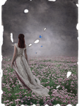 - Butterflies and Painted Skies -