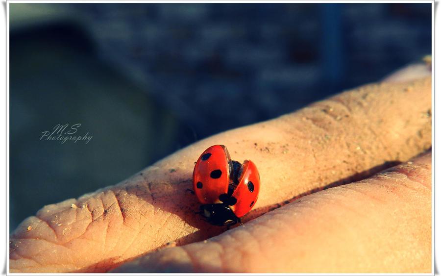 Ladybug by moonik9