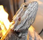 poser dragon