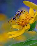 bug thing