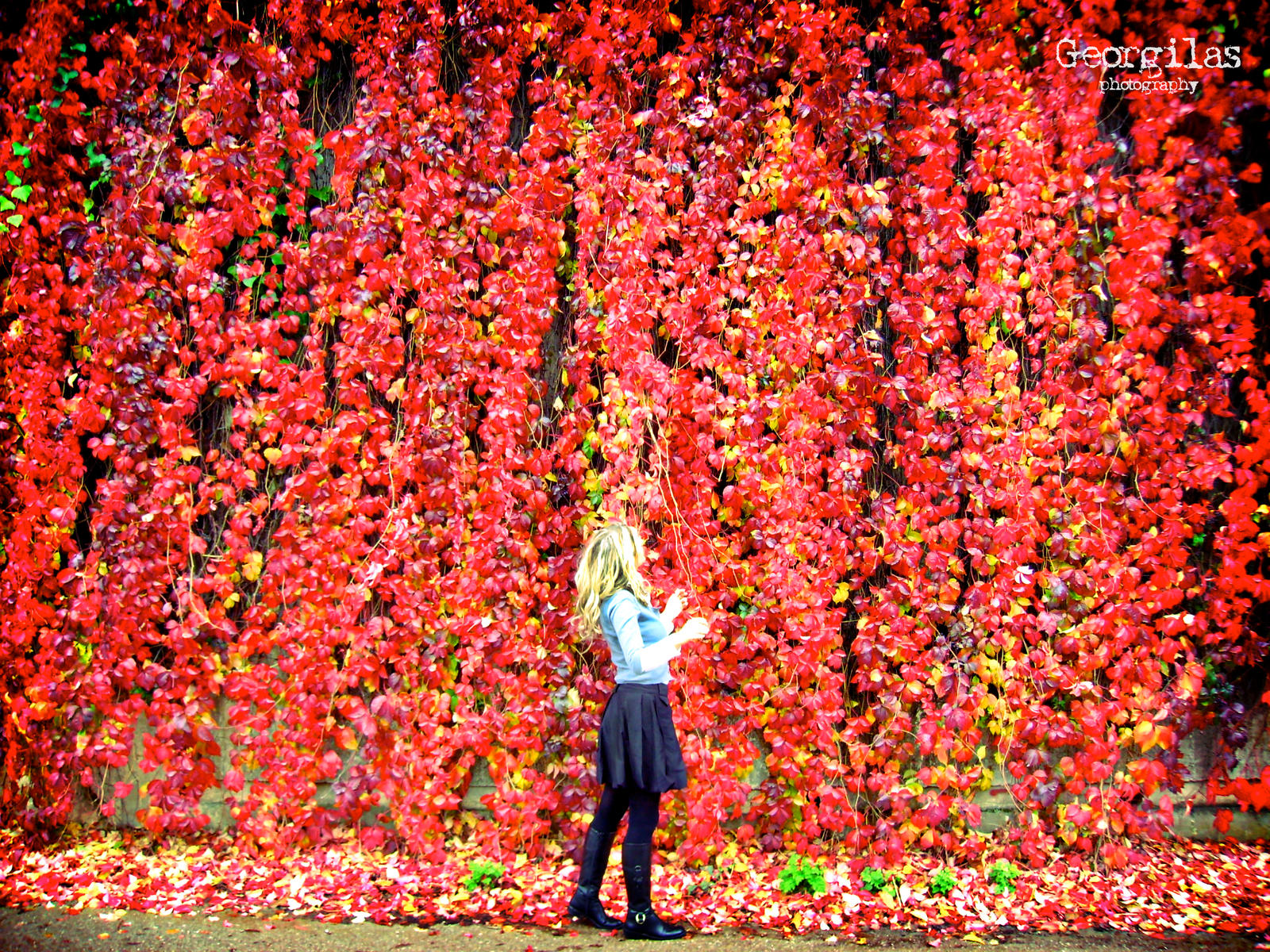 Red Wall Flowers by georgilas on DeviantArt