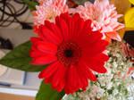 Stock: Red Daisy
