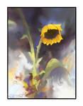 ''Sunflower in equilibrium'' by Jakub Mojrzesz