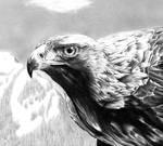 Eagle - Close Up