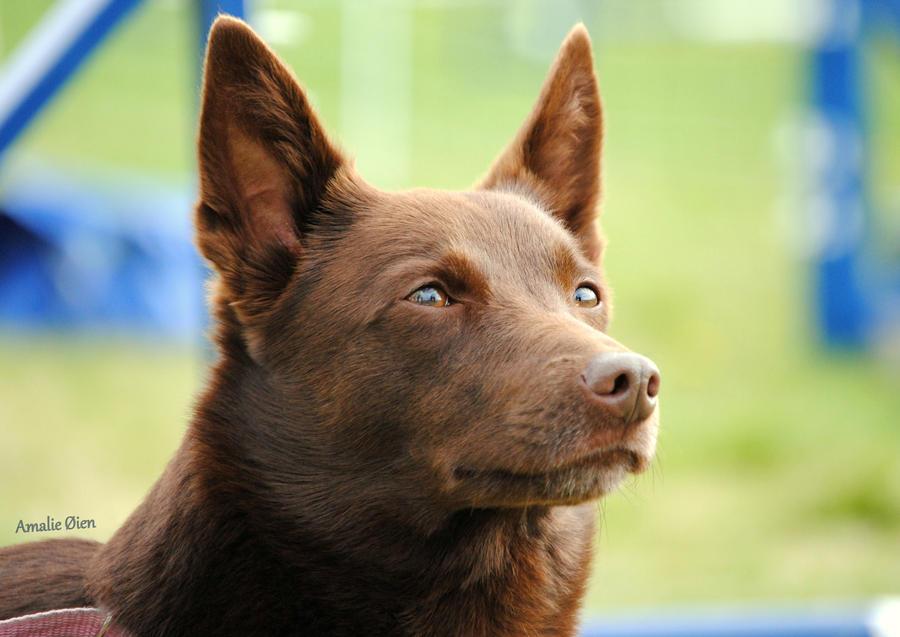 Agility Training Dog Asheville River Arts