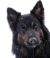 We love snow 2 by Shiranui