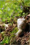 Snail by Shiranui