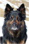 Happy Chodsky pes by Shiranui