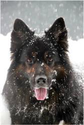 We love snow 4