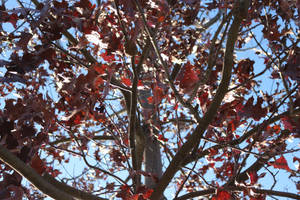 Red tree from below