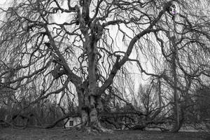 Horror Tree by adenisej25