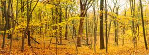 Magical Autumn Forest