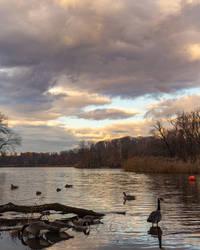 Geese Enjoying a Sunrise