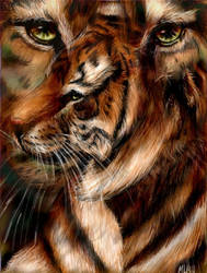 tigers for jim final