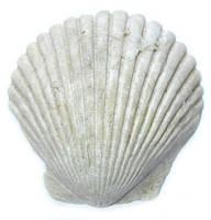 Nature Shell 1