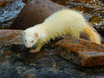 Albino River Queen by WeaselWomanCreations