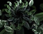 Flower spiral 3