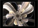 Flower black and white
