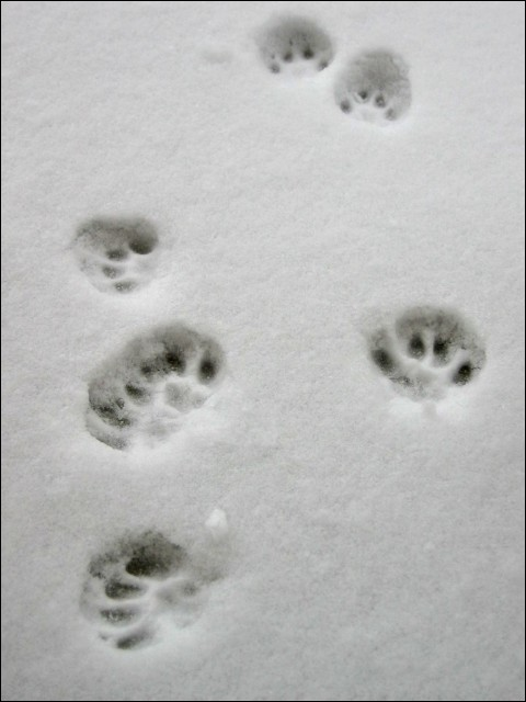 Cat prints by BimaFatima