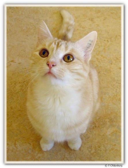 Cat below by BimaFatima