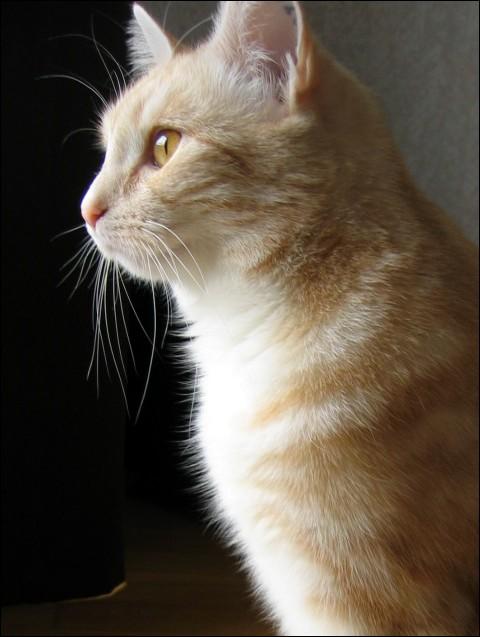 Profile by BimaFatima