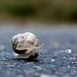 slow. by frankieG15