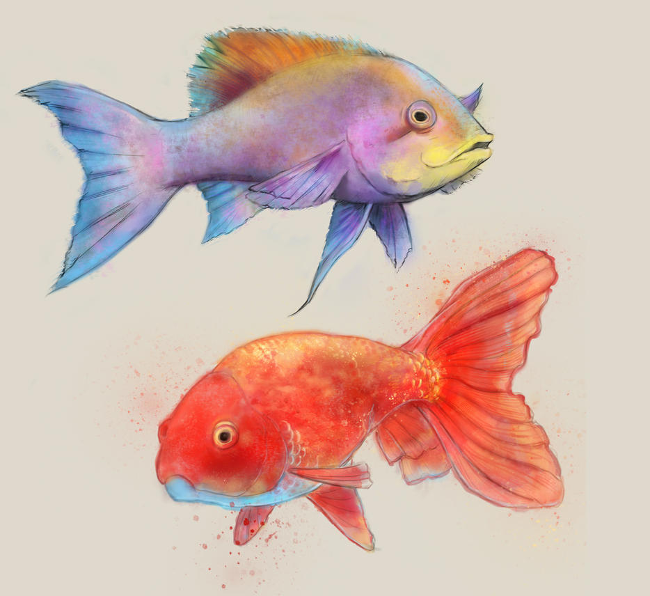 Fish Water Color Study by KenryChu on DeviantArt